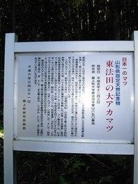 日本一の松