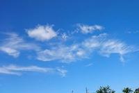 「ピンクとグレー」釜山国際映画祭 中島裕翔と菅田将暉が屋外舞台挨拶!画像は?東京国際映画祭の上映時間が