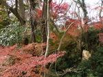 地元の佐倉城跡へ紅葉狩りに