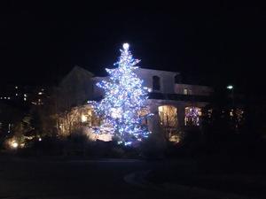 お隣さんのクリスマスツリー