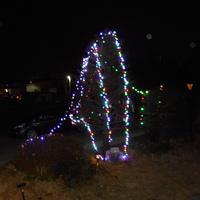 クリスマスのツリー下ろし