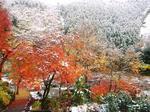 今年の初雪の感触