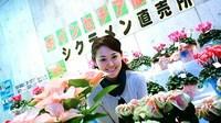 ☆クリスマスの植物と仙台伝統野菜☆