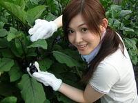 野菜収穫・第二弾!