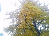 最後の黄色…仙台市中心部