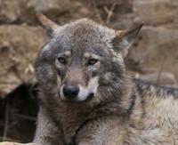 新生銀狼で突き進む!