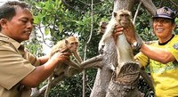 マングロ-ブの森に放されたサルたち