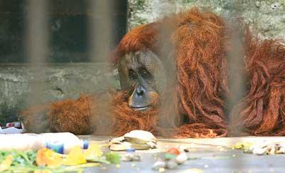 スラバヤ動物園予算不足
