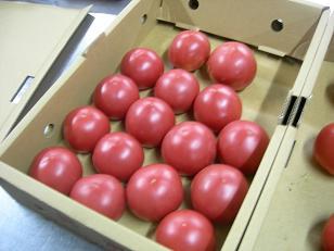 グロリントマト。
