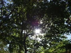 丸森町 不動尊 キャンプ場(木々)