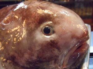白石 浜料理 くるま 珍魚