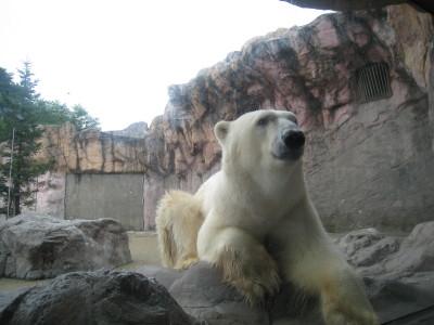 八木山動物園♪
