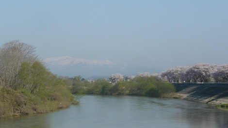 栗駒山と桜