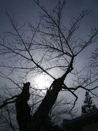 今日の樹♪