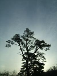 今朝の樹's♪