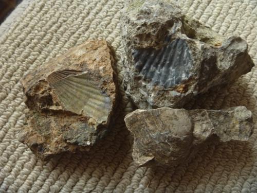 化石採集の旅