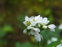 花の園便り
