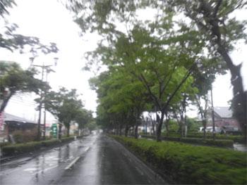 雨に濡れて・・・街路樹