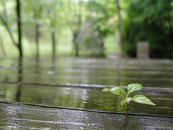 雨の「うどう沼公園」