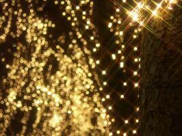 馬上かまぼこ店presents 『光のページェント』企画