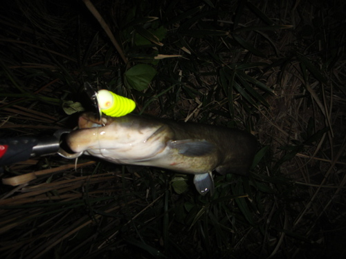 水面炸裂魚
