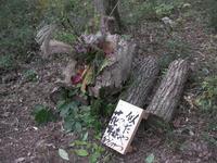 ニタヤツノさん「似たやつの森in花野」
