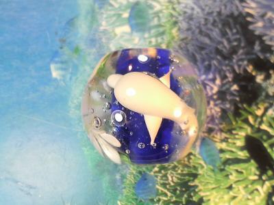 とんぼ玉 『美ら海の花』