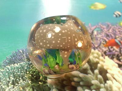 とんぼ玉 『美ら海~ジンベエザメ~』