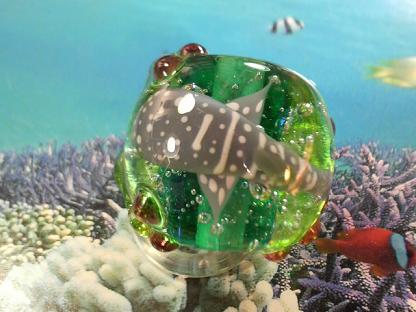 とんぼ玉 『美ら海とかえる』