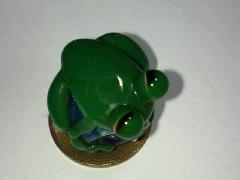 変な目のカエル