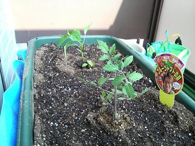とんぼ玉用パーツと家庭菜園