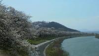 桜の回廊・・・一目千本櫻