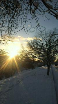 輝いて・・・雪の朝