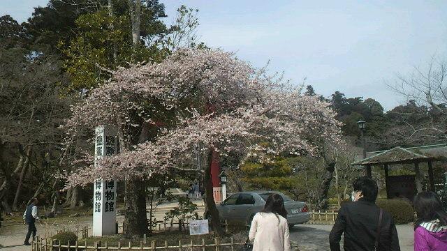 春爛漫・・・満開