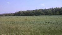 5月の風が運んだもの・・・高原