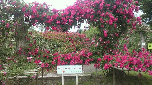 ♪バ~ラが咲いた~♪・・・バラ園
