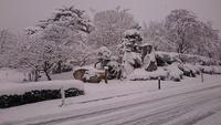 雪!そして寒いです! 2018/02/12 13:38:19
