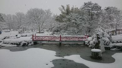 雪!そして寒いです!