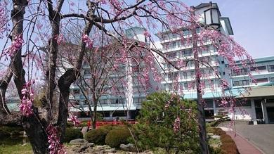 緑水亭の桜2018