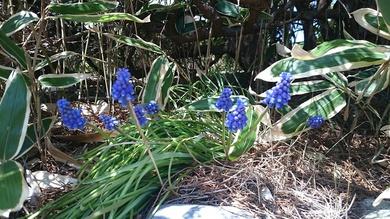 春のお花、次々と!
