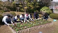 新入社員と一緒にお花を植えました! 2017/04/23 19:06:33