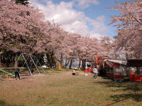 【平筒沼ふれあい公園桜まつり】と【佐沼桜まつり】が開催されます
