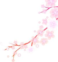 昨日仙台で桜の開花宣言が出ました!