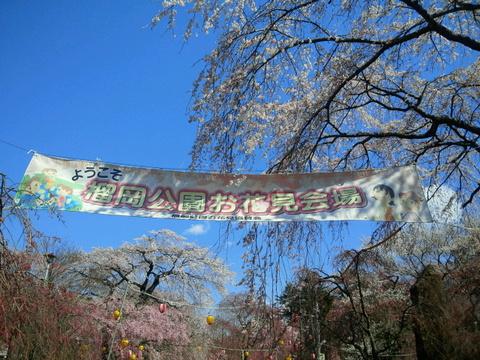 榴岡公園満開の桜