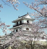 【白石城桜まつり】は中止ですが、夜桜ライトアップは行われるようです