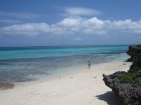 サンゴ礁の水中撮影