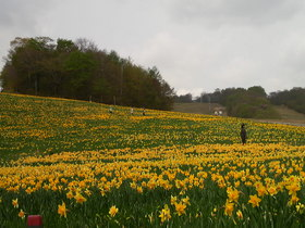 白銀から黄色の絨毯へ・・・えぼしスキー場