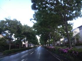 雨上がりのトンネル・・・街路樹