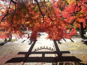 朱と紅と・・・賀茂神社