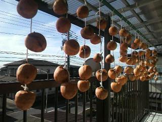 寒風と太陽を・・・干し柿